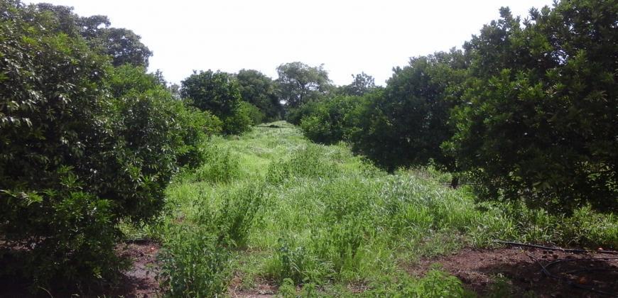 Verger de 10 hectares en titre foncier à vendre à Niamana